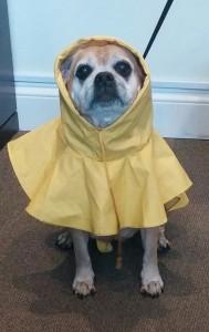 Rain, Rain, Go Away!!